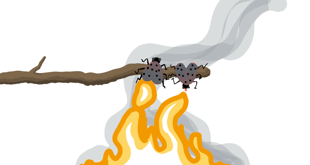 Lanternfly_Smores.png